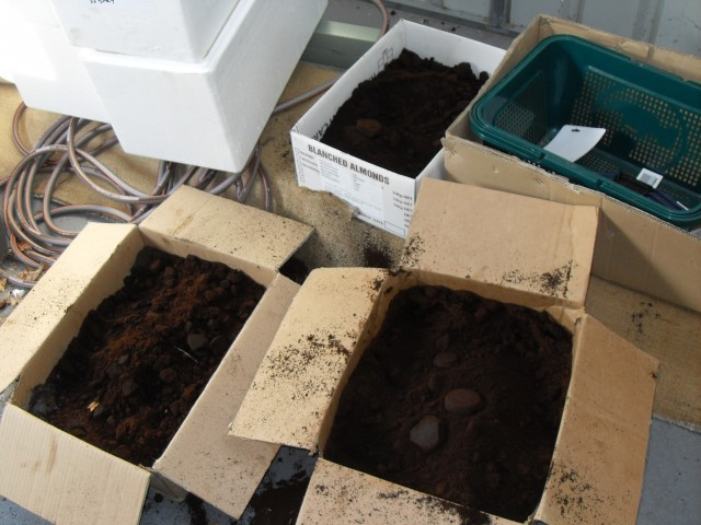 Coffee grounds stored garden compost