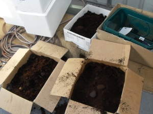 Coffee grounds being stored for later use in the garden or compost