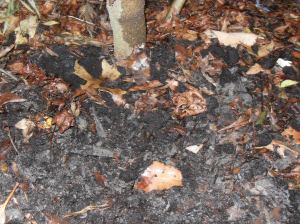 coffee grounds soil