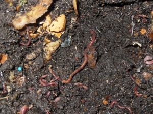 A worm farm in action