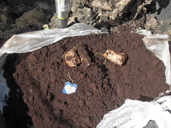 coffee grounds with apple and tea bag for compost