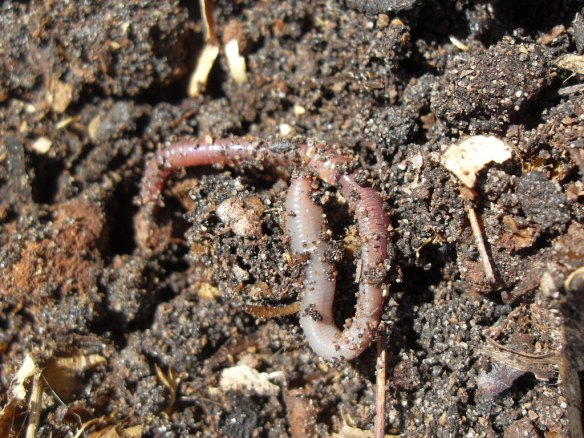 Coffee grounds, wood chips, leafmould, earthworms