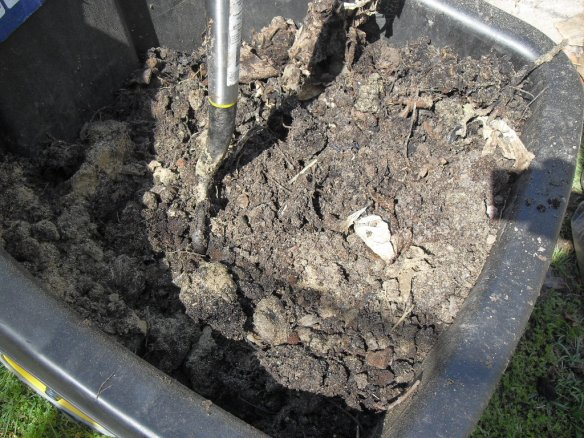 coffee grounds now combined with compost as new soil