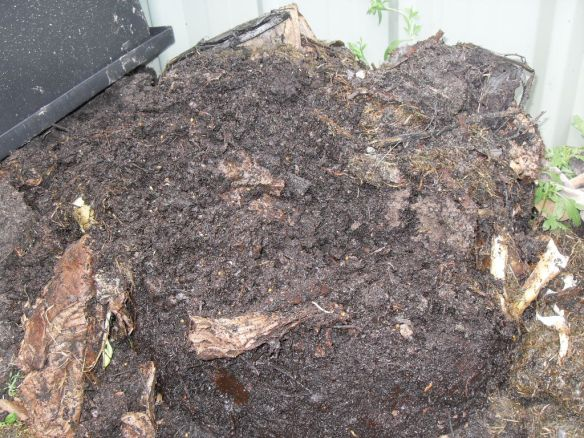 This pile of coffee compost is full of worms and ready for use