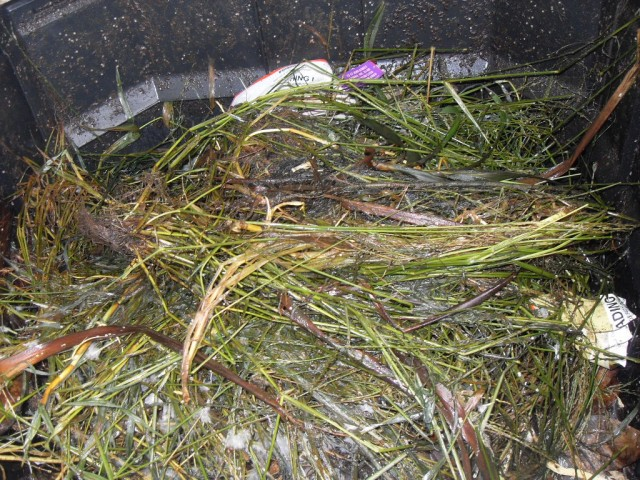 Inside the hot compost bin