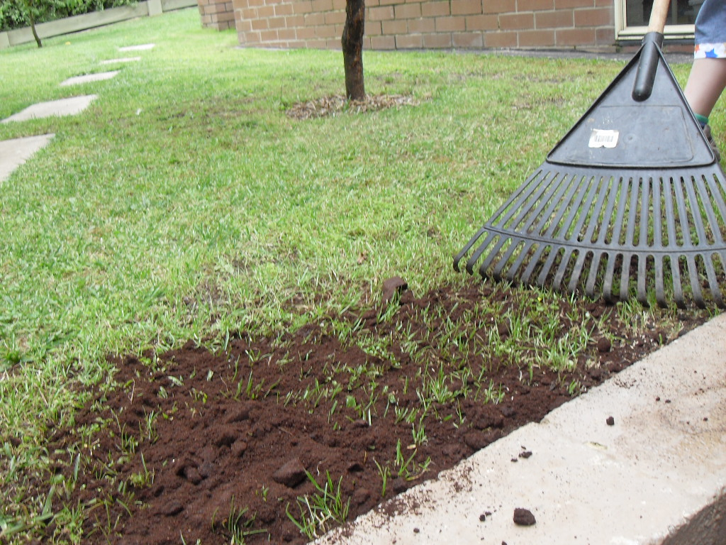 Best way to plant grass seed - Raking In The Coffee Grounds