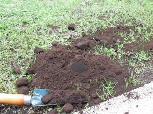 coffee grounds ready to be crushed and spread into the lawn