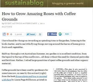 coffee grounds as a fertilizer for roses