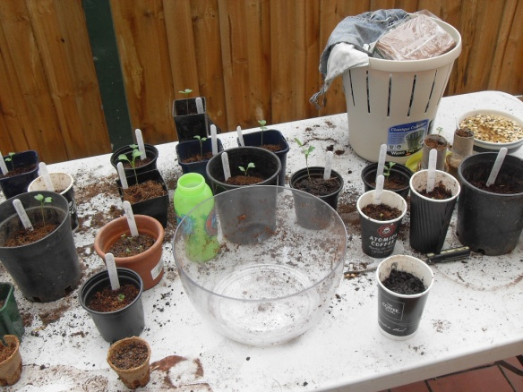 preparing-seedlings-for-winter