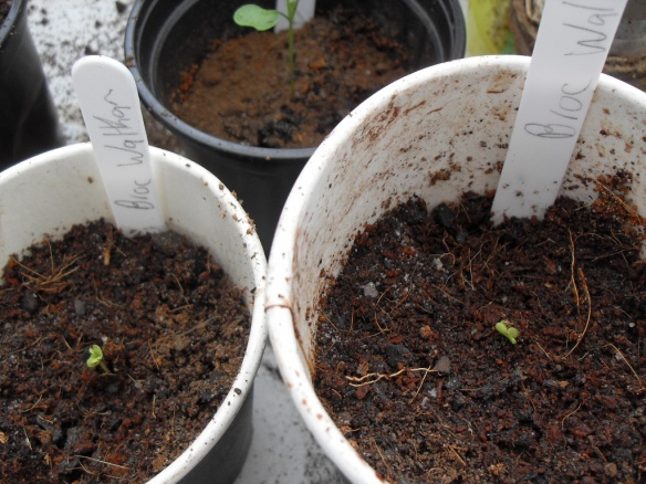 seedling-emerge-coffee-grounds-mix