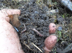 a handful of worms in used grounds