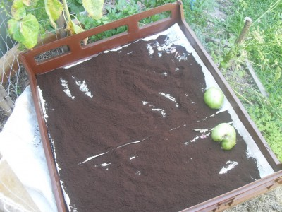 drying coffee grounds spent
