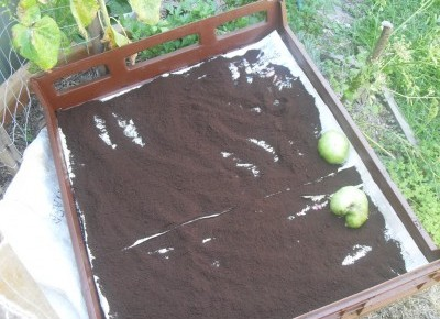 Ground to ground serving coffee grounds for gardens - How to use coffee grounds in garden ...