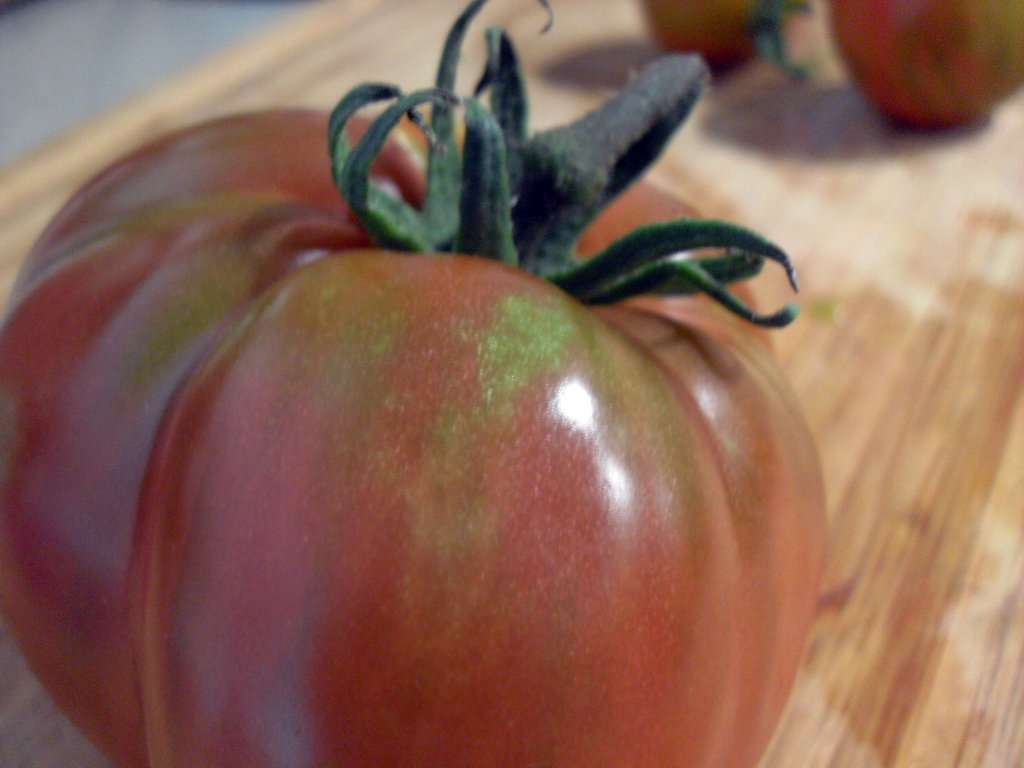 Coffee Grounds Fertilize Tomatoes!! | Ground to Ground