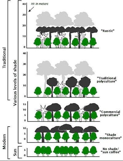 topography of various methods of coffee growing