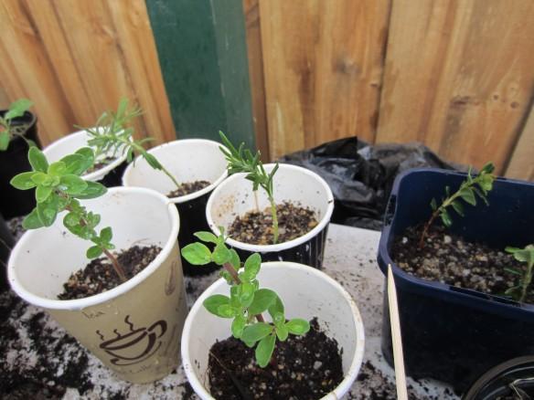 herbs for garden