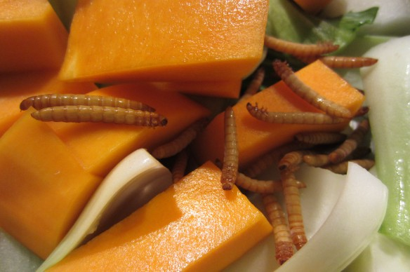 cook insects for persons dinner