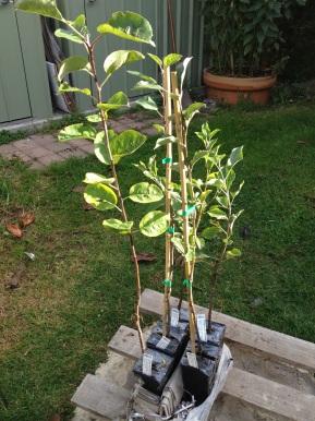 Planting Apple Trees inAutumn