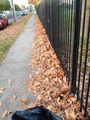 Autumn Leaves – SummerSoil