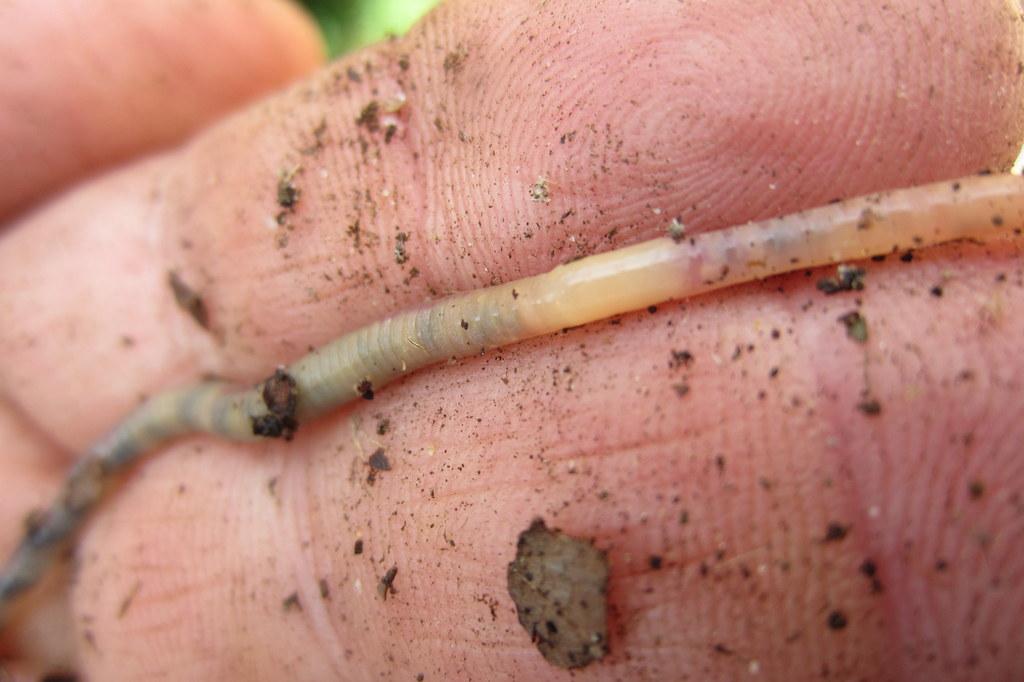 a clear worm crawling