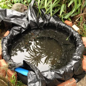 Don't Make These Mistakes When You Build a Pond in YourGarden