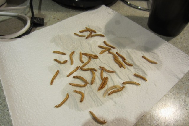 mealworms boil prepare to cook