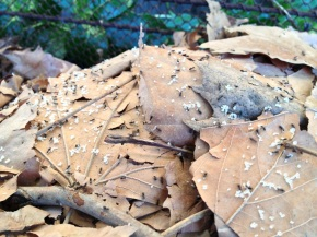 Ant Colony on theMove!