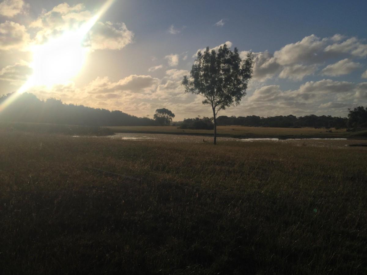 open meadow pond