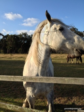 a white horse on the island