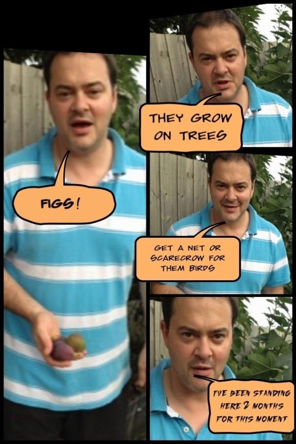shane genziuk figs