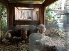 quail cage hutch