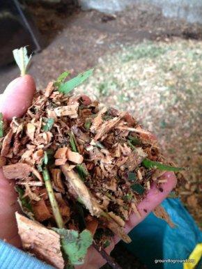 Mulch on a VegetableGarden