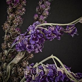 Five Herbs That Will Ward OffFlies