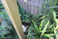 chickens hide in garden