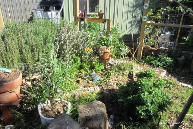 a full garden of plants