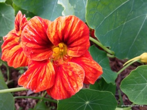 The First Gardening Survey for2014