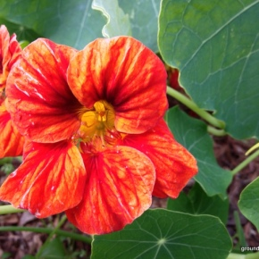 The First Gardening Survey for 2014