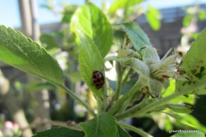 The Top Reason Why You Don't Need Pesticides in YourGarden