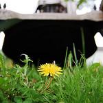 lawnmower damage grass