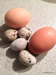 quail-chicken-eggs