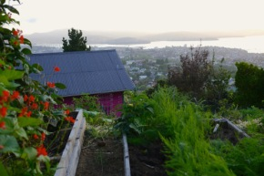 Visiting a hillside Backyard Permaculture in Hobart…