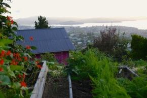 Visiting a hillside Backyard Permaculture inHobart…