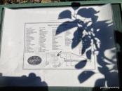 Rippon Lea Estate Apple Orchard