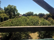 View from over the orchard