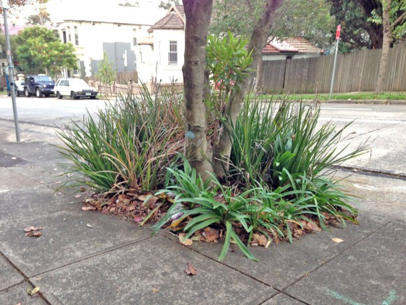 Residents can't wait to plant underneath their trees.