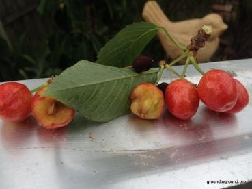 Cherries-11