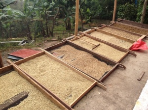 Ferment Coffee Beans