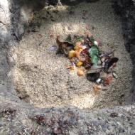 Pelusa Compost-5