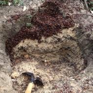 Pelusa Compost-6