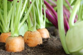Tips for Planning Your First VegetableGarden